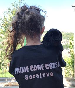 Cane Corso (Kane Korso) štenci