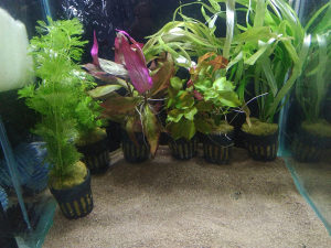 Biljke 5km porcija