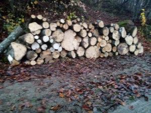 Drva grab bukva