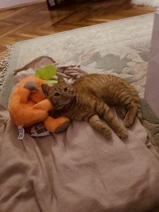Prelijepa Milna maca
