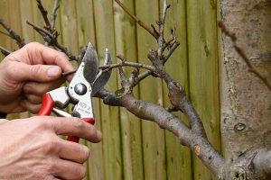 Održavanje voćnjaka - Gračanica