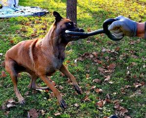 Pull guma za pse 40cm