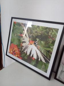Umjetnicke fotografije