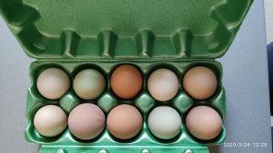 Domaća jaja iz slobodnog uzgoja