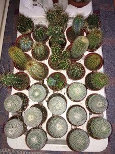 Kaktusi i sukulenti
