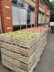 Rakija domaca jabukovaca jabuka