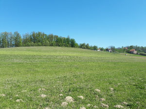 Poljoprivredno imanje zemljiste plac Glamocani