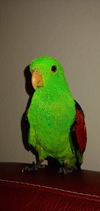 Papagaj Crvenokrili